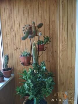 Сдам в аренду 3-комн. квартиру вторичного фонда в Московском р-не - Фото 3