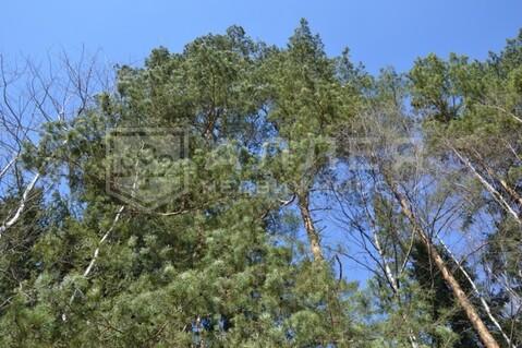 Лесной участок 28 сот. - Фото 1