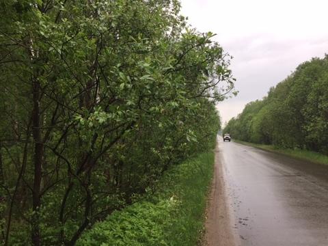 Участок, 12,5 соток с лесом, ИЖС, д. Панино Чеховский район - Фото 1