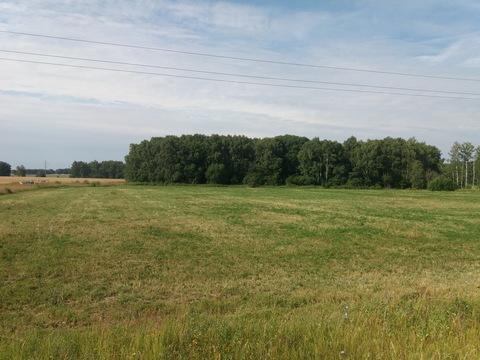 Продается участок сельхозназначения у д. Иванчиково Зарайского р-на МО - Фото 1