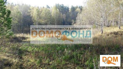 Продажа участка, Кубовая, Новосибирский район, Купеческая - Фото 5