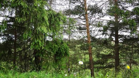 Земельный участок на реке Ить, район д. Нестерово. - Фото 5