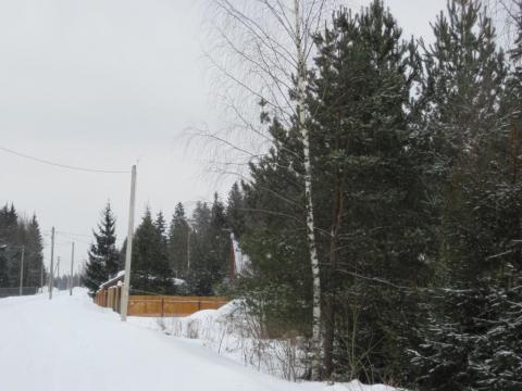 Кантемировец. Лесной участок 20 сот. Магистральный газ, охрана. - Фото 4