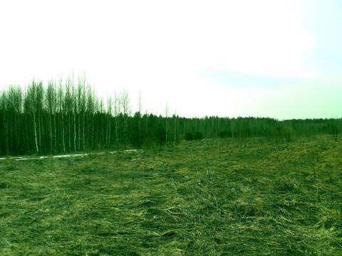 Судогодский р-он, Колесня д, земля на продажу - Фото 4