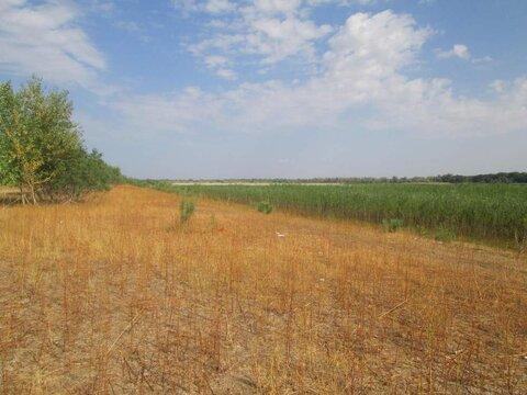 Продается земля 53000 соток, село Пришиб - Фото 1