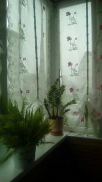 Продам 1 к.кв, ул. Кочетова 10 к.3, Продажа квартир в Великом Новгороде, ID объекта - 330991370 - Фото 1