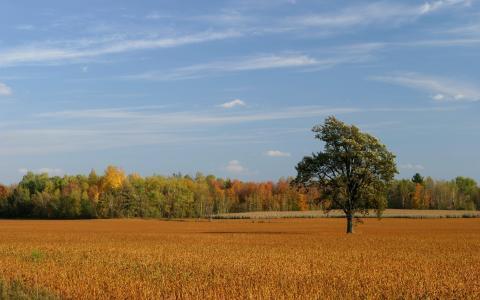 Земельный участок п. Красноярска 29 га - Фото 1