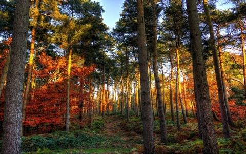 Продам земельный участок 111,16 соток, ИЖС, на опушке соснового леса,