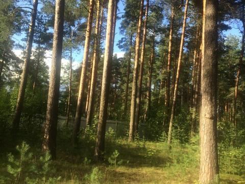 Земельный участок 35сот. Мельничий ручей, ИЖС, 20км. до грода - Фото 4