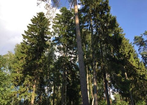 Коттедж в посёлке Малаховка, 250м2, 18 соток - Фото 4