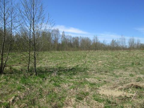 Низовицы: Земельный участок 27 соток (в собственности) ИЖС - Фото 1