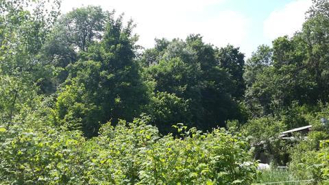 Без пр-в дача в лесу, 25 минут от Краснодара, грибы, ягоды. Счастье! - Фото 3