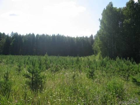 Продам дачный участок на озере Таватуй - Фото 1