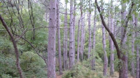Срочная продажа 20 соток в Алупке в сосновом лесу - Фото 5