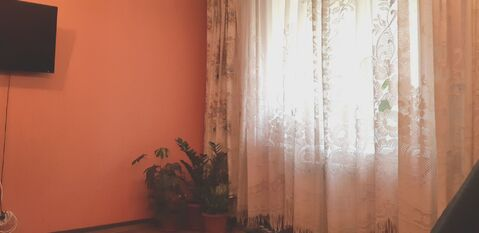 Студия, Павловский тракт, 203 - Фото 3