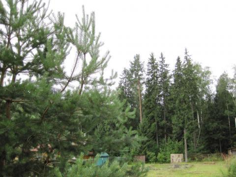 10 соток у самого леса, газ, охрана. - Фото 5