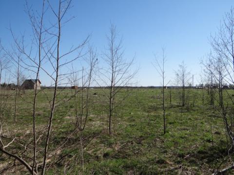 Земельный участок по Новорижскому шоссе рядом с Рузским водохранилищем - Фото 1