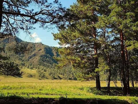 Продажа участка, Аскат, Чемальский район - Фото 4
