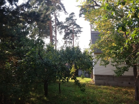 Шикарный участок 29 сот. с соснами в п. Загорянский, 17 км. от МКАД - Фото 1