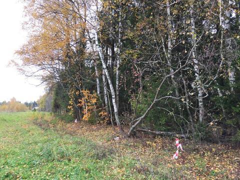 Участок 7 соток, в д. Новинки, 47 км. от МКАД по Дмитровскому шоссе - Фото 4