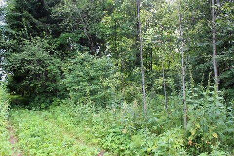 Продам лесной участок 15 соток в д. Гришино. - Фото 5