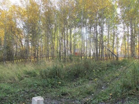 Участок 20 соток с лесом в п.Минино - Фото 5