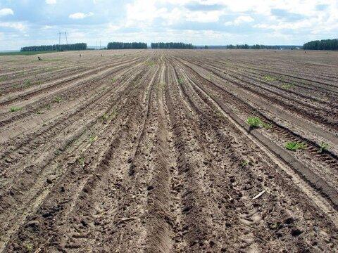 Продаю зем. участок сельхозназначения