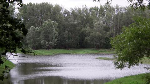 Участок 5 га в 2 км. от поселка Политотдел Любинского района - Фото 3