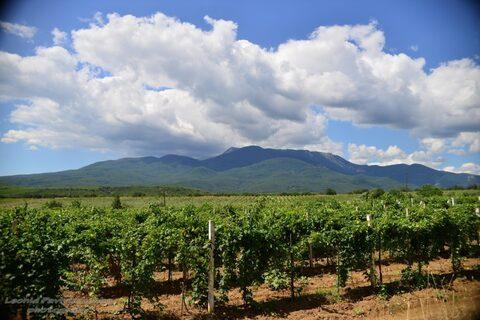 Продам Вин завод +150 га виноградников - Фото 3