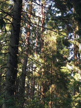 Стародачное место, Николина гора, - Фото 4