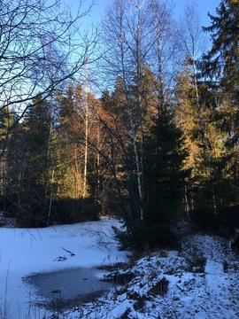Участок 7 соток с калиткой в лес - Фото 2
