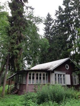 Участок 16 соток с лесными деревьями, Правдинский - Фото 3