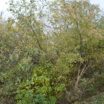 Земельный участок 6 соток в Ялте - Фото 2