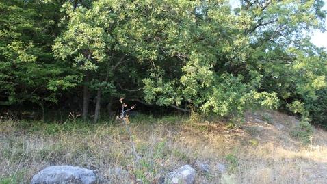 Участок 6 соток с видом на море и виноградники в Алупке - Фото 4