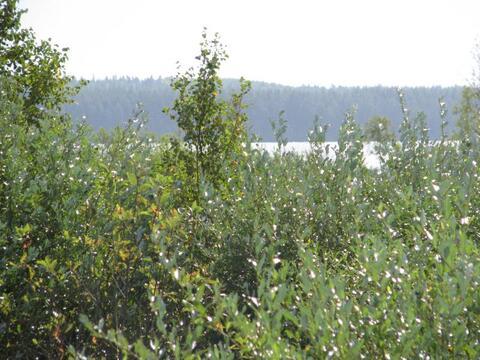 Участок ИЖС 15 соток на озере Гусиное в поселке Приладожское - Фото 5