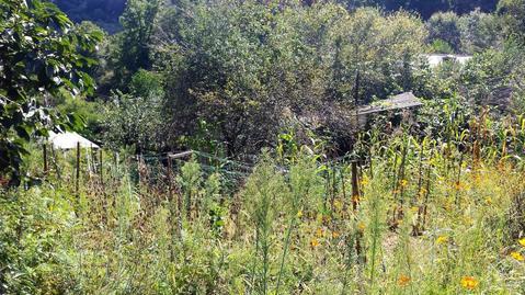 Земельный участок с дачным домиком - Фото 2
