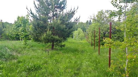 17 соток наедине с природой, д.Горки, Заокский р-он, рядом лес и р.Ока - Фото 5