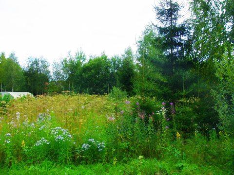 Земельный участок 8 соток пос.Лесные пруды у д.Шапкино - Фото 2