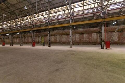 Сдам производственное помещение 1806 кв.м, м. Площадь Ленина - Фото 5