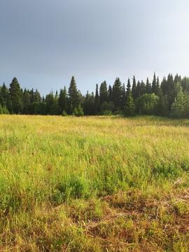 Продам земельный участок 26 соток ИЖС, село Гольяны, улица Лесная - Фото 4