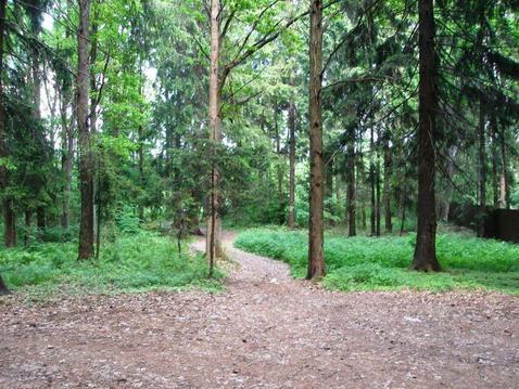 Лесной участок в д. Тимонино. - Фото 2