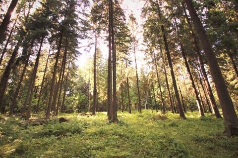 Продаю лесной участок - Фото 4