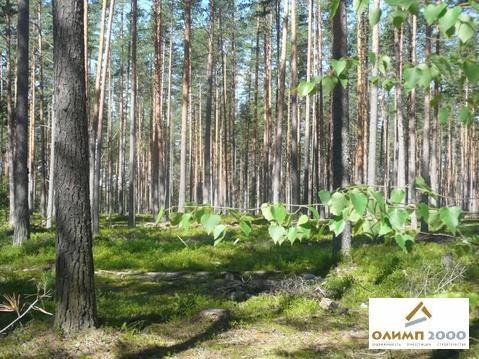 Нагорное, Выборгский район, участок 8 соток, ИЖС - Фото 4