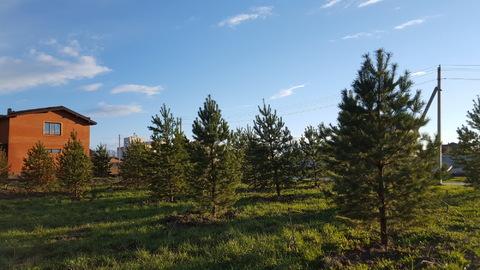 Лесной участок с соснами на Новорижском шоссе в 29 км от МКАД - Фото 3