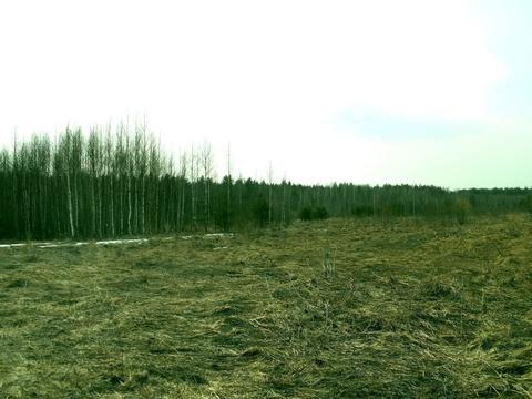 Судогодский р-он, Колесня д, земля на продажу - Фото 3