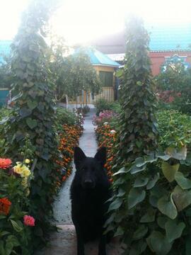 Продажа дома, Улан-Удэ, Ул. Хвойная - Фото 4