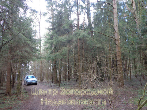 Участок, Рублево-Успенское ш, Ильинское ш, 26 км от МКАД, Маслово д. . - Фото 3