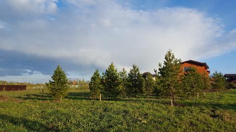 Лесной участок с соснами на Новорижском шоссе в 29 км от МКАД - Фото 5
