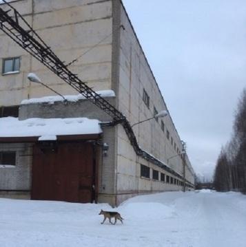 Сдам производственный комплекс 15 500 кв.м. - Фото 3