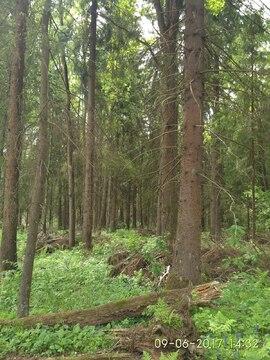 Земельный участок 10 соток по Рогачевскому шоссе, деревня Поповка - Фото 3